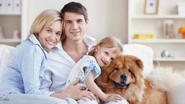 Wills & Trusts dog-young-family Direct Wills Kentish Town